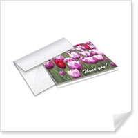 5 x 7 Greeting Cards